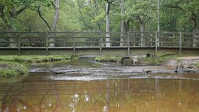 Puttles foot bridge. Puttles Bridge crosses a small stream in the New Forest , Hampshire , UK stock footage