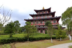 Putuoshan佛教徒学院 图库摄影