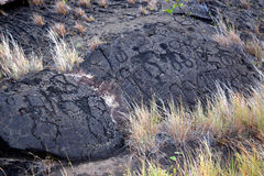 Puu Loa Petroglyphs on Chain of Craters Road. In Hawai'i Volcanoes National Park Royalty Free Stock Photo