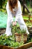 Puxando ervas daninhas Foto de Stock