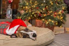 Puxando a árvore de Natal Fotos de Stock Royalty Free