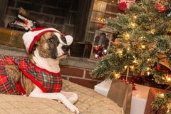 Puxando a árvore de Natal Foto de Stock Royalty Free