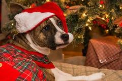 Puxando a árvore de Natal Foto de Stock