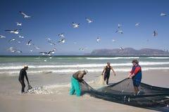 Puxar na rede de pesca com a captura do dia Imagem de Stock