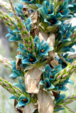 Puya alpestris flowers blooming Royalty Free Stock Photos