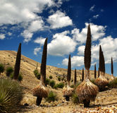 Puya raimondii Royalty Free Stock Photography
