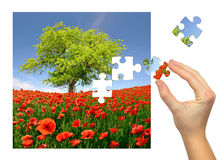 Puzzle. Spring landscape with poppy field Royalty Free Stock Photography