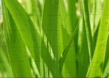 puzzle 3d con l'erba verde della sorgente di immagine Fotografia Stock Libera da Diritti