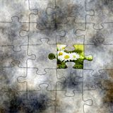 Puzzle and chamomile. Close up of Puzzle and chamomile Royalty Free Stock Photography