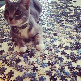 Puzzle de Kitty Photos stock