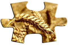 Puzzle with grain Royalty Free Stock Photography