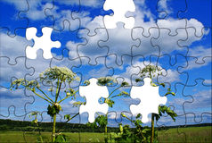 Puzzle landscape. Summer rural puzzle landscape with Heracleum sosnowsky Royalty Free Stock Images