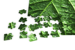 Puzzle of a leaf. Nearly completed puzzle of a leaf Stock Images