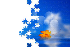Puzzle of leaf fallen on the water Stock Image