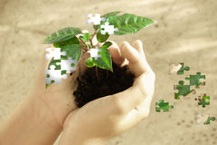 Puzzle plant on hand Stock Photo