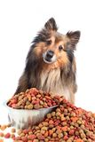 Puzzled looking dog with food bowl Stock Photography