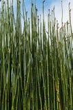 Puzzlegrass Royalty-vrije Stock Fotografie