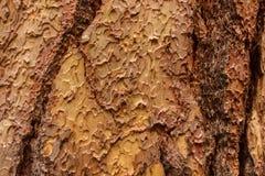 Puzzlepiece bark background Royalty Free Stock Image