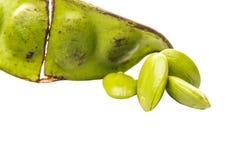 Puzzo Bean Or Parkia Speciosa V fotografia stock