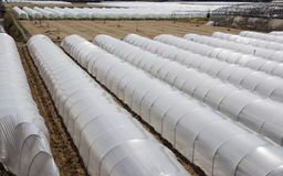 PVC greenhouses Stock Image