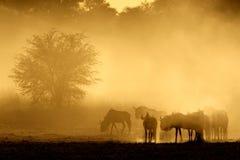 pyłu błękitny wildebeest Fotografia Royalty Free