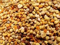 pyłek Fotografia Stock