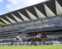 pyatigorsk лошади hippodrome caucasus северное участвуя в гонке Россия Стоковая Фотография