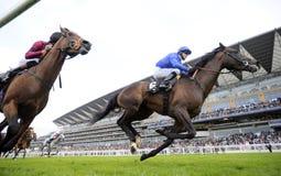 pyatigorsk лошади hippodrome caucasus северное участвуя в гонке Россия Стоковое Изображение RF