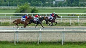 Horse race in Pyatigorsk