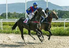 Horse racing for the prize of Comparison royalty free stock images