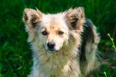 Pye-chien Photo stock