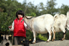 Pygmy goat and girl Royalty Free Stock Photo