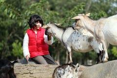 Pygmy goat and girl Stock Photos