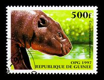 Pygmy Hippopotamus (Choeropsis liberiensis), Native Animals seri. MOSCOW, RUSSIA - NOVEMBER 26, 2017: A stamp printed in Guinea shows Pygmy royalty free stock photography