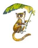 Pygmy Mouse Lemur Royalty Free Stock Photo