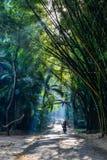 Βοτανικός κήπος σε Pyin Oo Lwin, το Μιανμάρ στοκ εικόνες