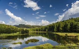 Pykara lake or river in Ooty Stock Images