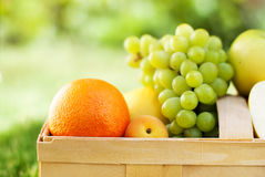 Pyknicznej Koszykowej świeżej żywności Życiorys Organicznie owoc Fotografia Royalty Free