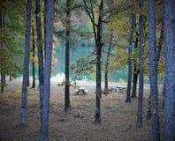 Pykniczny teren jeziorem pod wysokimi drzewami Zdjęcia Royalty Free