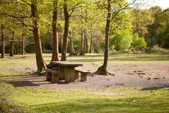 Pykniczny teren w opata drewnie, Wschodni Sussex, Anglia Fotografia Stock