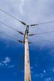 Pylône en bois de Polonais de l'électricité de puissance, haut Volage, fond de ciel bleu Photo libre de droits