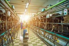 """Pyljava Ukraina †""""September 13, 2017: arbetare av en mejerilantgård Royaltyfria Foton"""