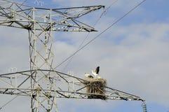 Pylon Home. Storks nesting on an electricity pylon Stock Photo