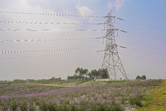 Pylon towering in flowering field in summer. A pylon towering in the field cultivated with purple flowers on early summer day Stock Images
