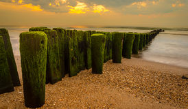 Pylons. Covered with algae Stock Photos