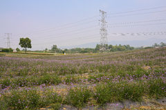 Pylons in flowering field in sunny summer Royalty Free Stock Photos