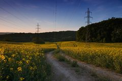 Pylons of power line in rape field after sunset. Stock Images