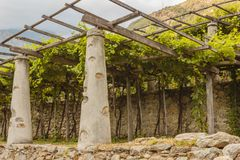 The typical agricultural architecture of the vineyards of Carema,Piedmont,Italy. Pylons, stone and lime columns and chestnut poles support the pergola of rows of Stock Image