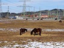 Pyloon op gebied met paarden Stock Foto