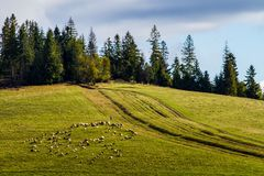 The beginning of autumn in the Carpathian Mountains Royalty Free Stock Photo